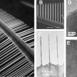 Dendrite Nanowire UV Laser Array