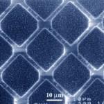 Zinc Oxide Nanowire Array